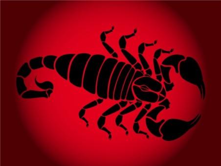 Scorpion Silhouette set vector