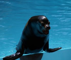 Sea lion in the water Stock Photo 08