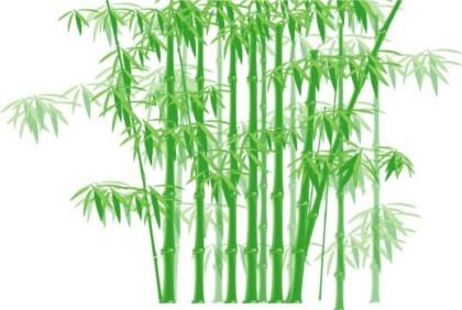 Shiny green bamboo vector