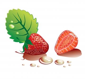 Strawberry vector graphics