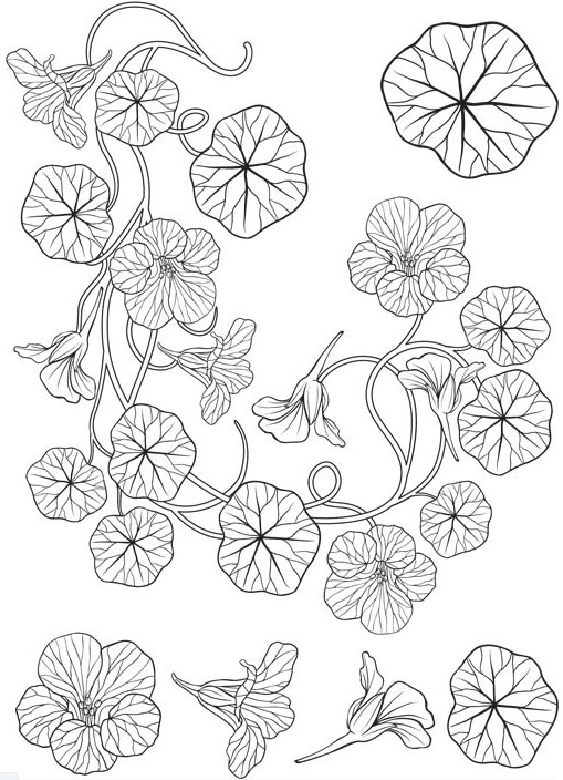 Stylish Ornate Flowers art vector