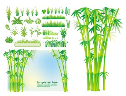 bamboo grass plant vector graphic