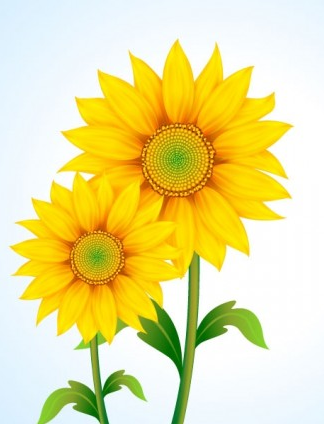 beautiful sun flower vector