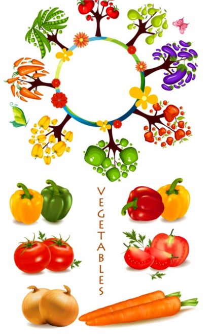 commonly vegetables Illustration vector
