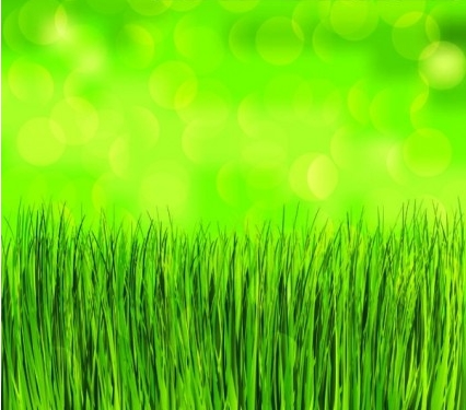 green grass background vectors