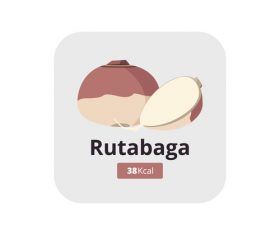 rutabaga vector icon