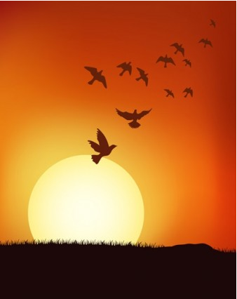 sunset under birds vectors graphic