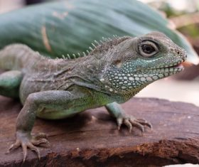 Agile lizard Stock Photo 02