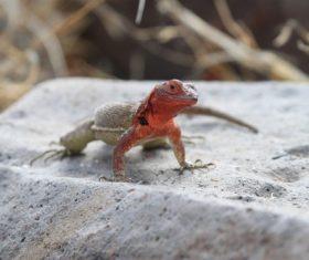 Agile lizard Stock Photo 08