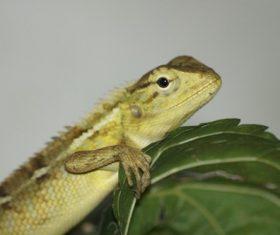 Agile lizard Stock Photo 09