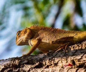 Agile lizard Stock Photo 10