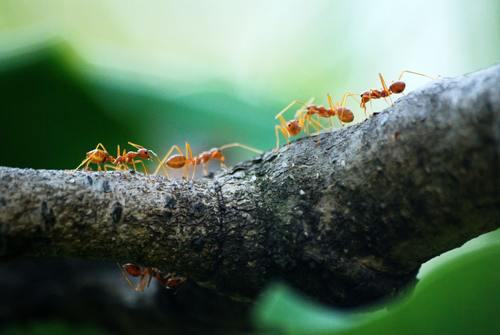 Ants on the trunk Stock Photo