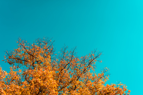 Autumn Tree scenery Stock Photo