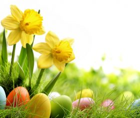 Basket of easter eggs on meadow Stock Photo 14