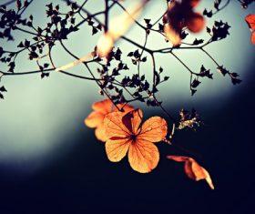 Beautiful autumn leaves landscape Stock Photo