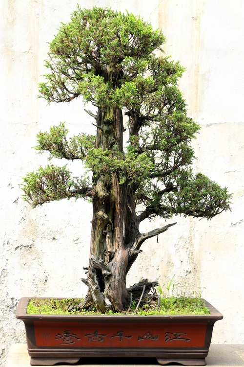 Beautiful green plant bonsai Stock Photo 01