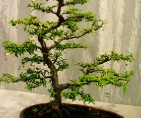 Beautiful green plant bonsai Stock Photo 02