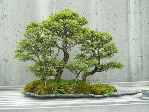 Beautiful green plant bonsai Stock Photo 03