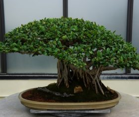 Beautiful green plant bonsai Stock Photo 04