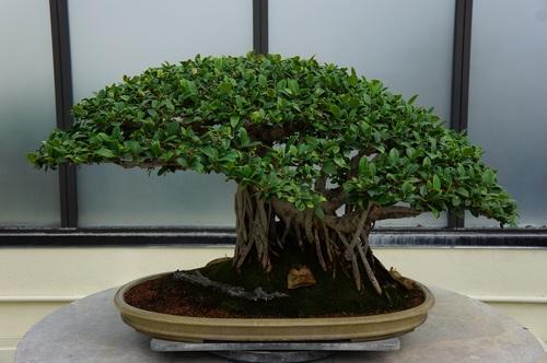 Beautiful green plant bonsai Stock Photo 04