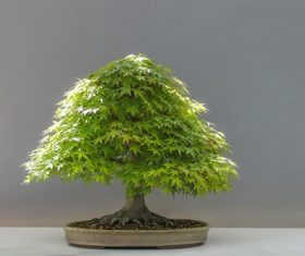 Beautiful green plant bonsai Stock Photo 06