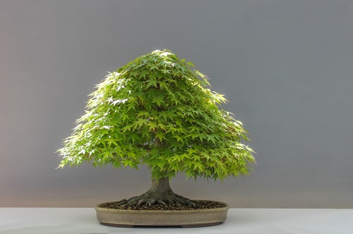 Beautiful green plant bonsai Stock Photo 06