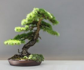 Beautiful green plant bonsai Stock Photo 07