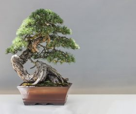 Beautiful green plant bonsai Stock Photo 08