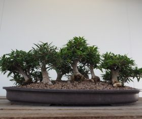 Beautiful green plant bonsai Stock Photo 10
