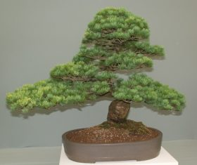 Beautiful green plant bonsai Stock Photo 14