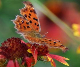 Beautiful spotted butterfly Stock Photo 08