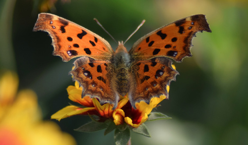 Beautiful spotted butterfly Stock Photo 09