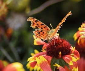 Beautiful spotted butterfly Stock Photo 10