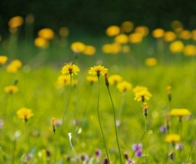 Beautiful yellow small wildflowers in the wild Stock Photo