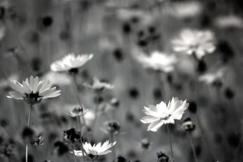 Black and white landscape photography Stock Photo 11