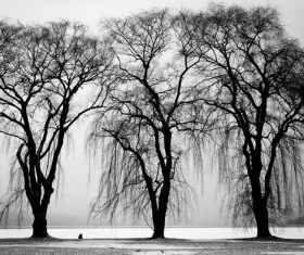 Black and white trees Stock Photo