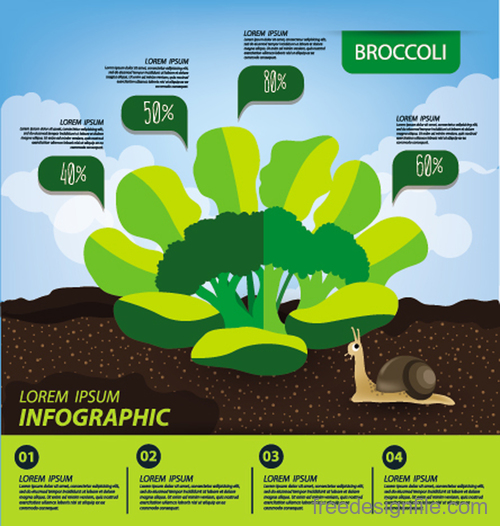 Broccoli infographic template vector material