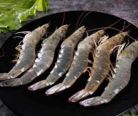 Delicious fresh base shrimp Stock Photo 01