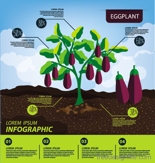 Eggplant infographic template vector material