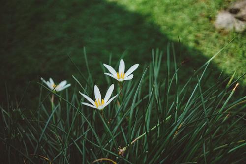 Elegant wildflowers Stock Photo 03