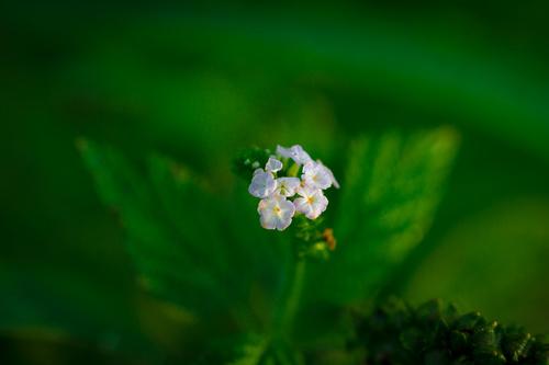 Elegant wildflowers Stock Photo 05