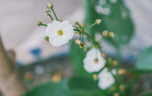 Elegant wildflowers Stock Photo 12