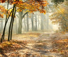 Fallen leaves in autumn forest at sunny weather Stock Photo 02
