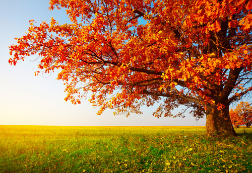 Fallen leaves in autumn forest at sunny weather Stock Photo 03