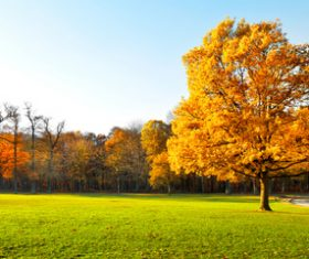 Fallen leaves in autumn forest at sunny weather Stock Photo 05