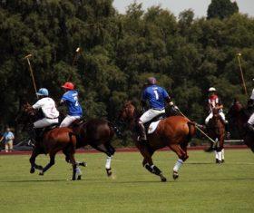 Fierce polo match Stock Photo 02