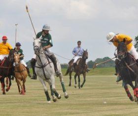 Fierce polo match Stock Photo 03