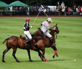 Fierce polo match Stock Photo 07