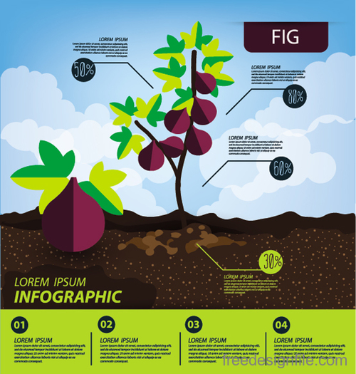 Fig infographic template vector material