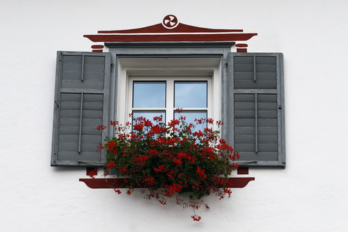 Flowers on the windowsill Stock Photo 01